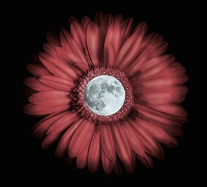 full-flower-moon-2013-3